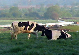 New Jersey Dairy Farm